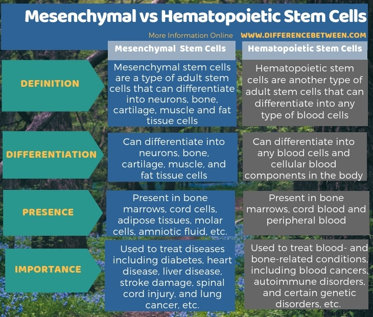 Difference Between Mesenchymal and Hematopoietic Stem Cells -Tabular Form