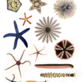 Difference Between Mollusca and Echinodermata