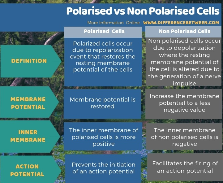 Difference Between Polarised and Non Polarised Cells - Tabular Form