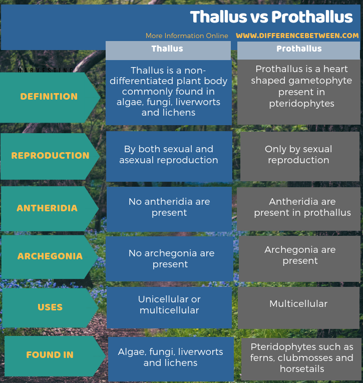 Difference Between Thallus and Prothallus -Tabular Form