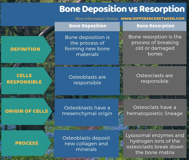Difference Between Bone Deposition and Resorption in Tabular Form