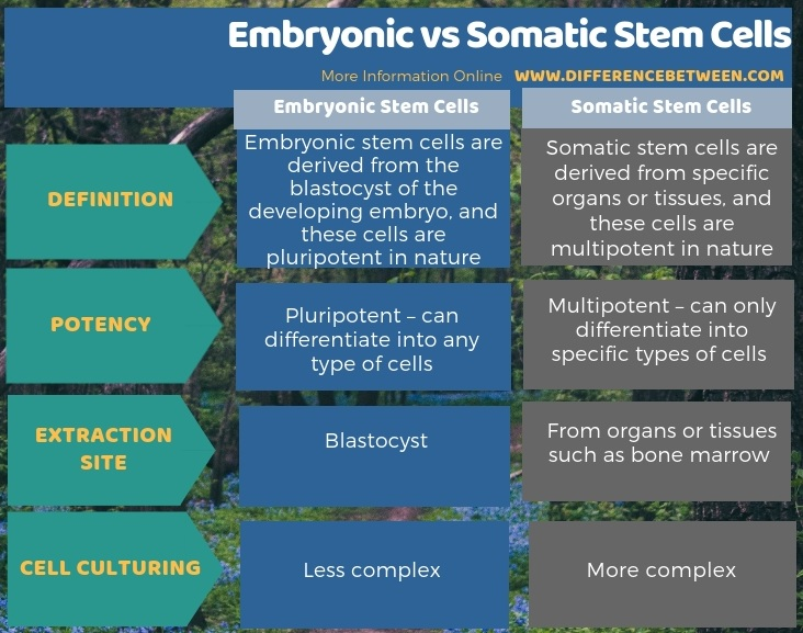 Difference Between Embryonic and Somatic Stem Cells - Tabular Form