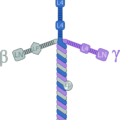 Difference Between Fibronectin and Laminin