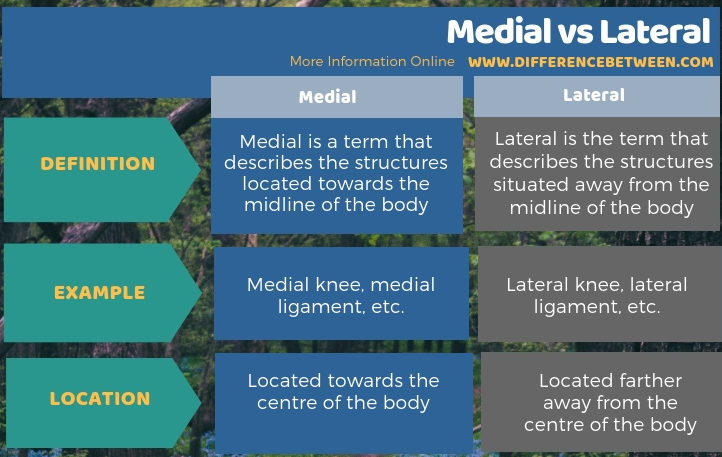 Difference Between Medial and Lateral in Tabular Form
