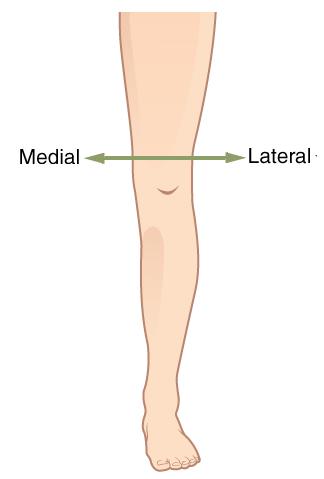 Medial vs Lateral