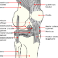 Difference Between Medial and Lateral