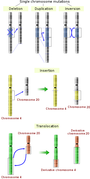 Difference Between Point Mutation and Chromosomal Mutation
