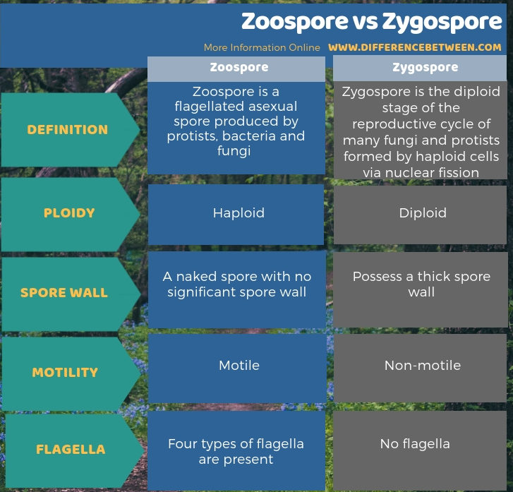 Difference Between Zoospore and Zygospore in Tabular Form