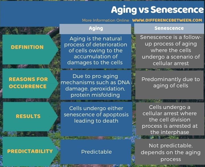 Difference Between Aging and Senescence in Tabular Form
