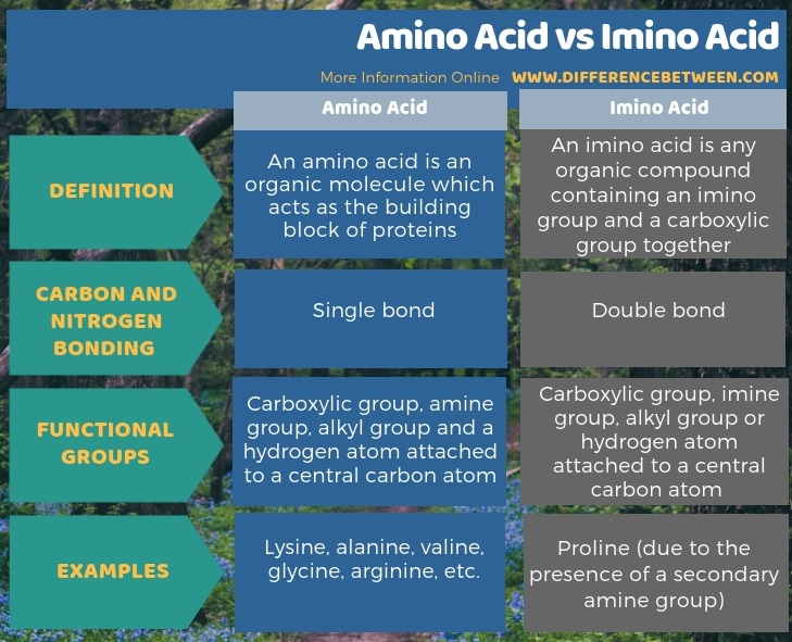 Difference Between Amino Acid and Imino Acid in Tabular Form
