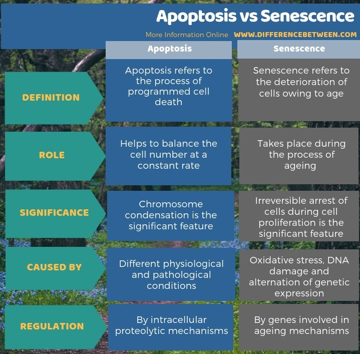 Difference Between Apoptosis and Senescence in Tabular Form