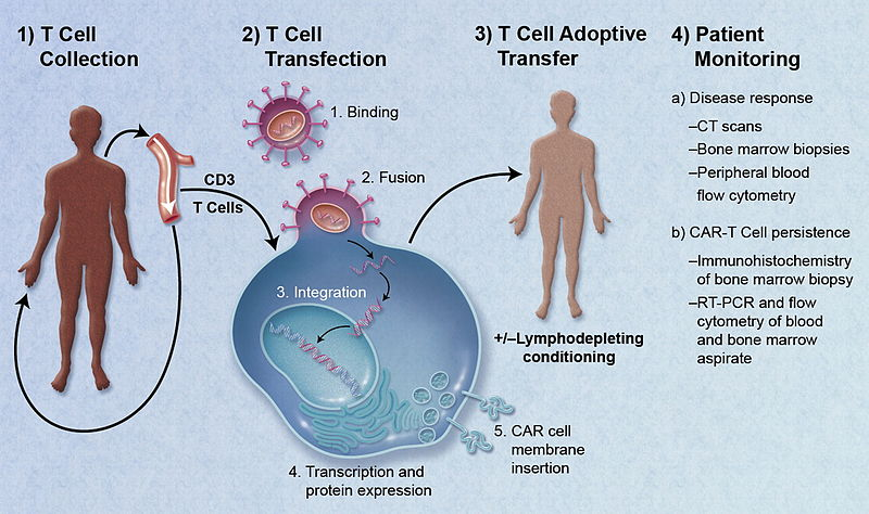 Difference Between CAR-T and TCR-T