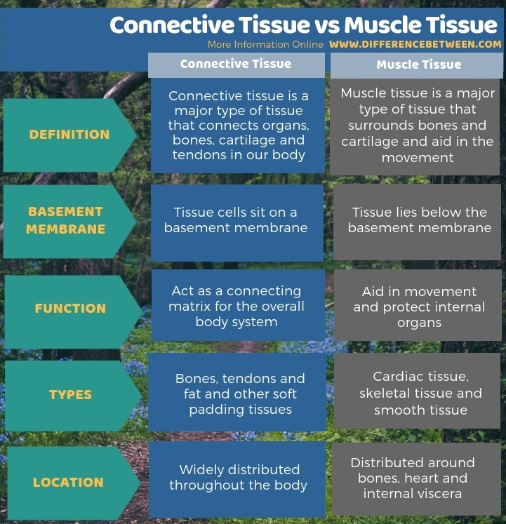 Difference Between Connective Tissue and Muscle Tissue in Tabular Form