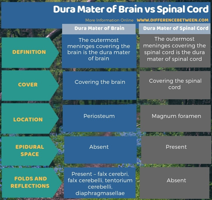 Difference Between Dura Mater of Brain and Spinal Cord in Tabular Form