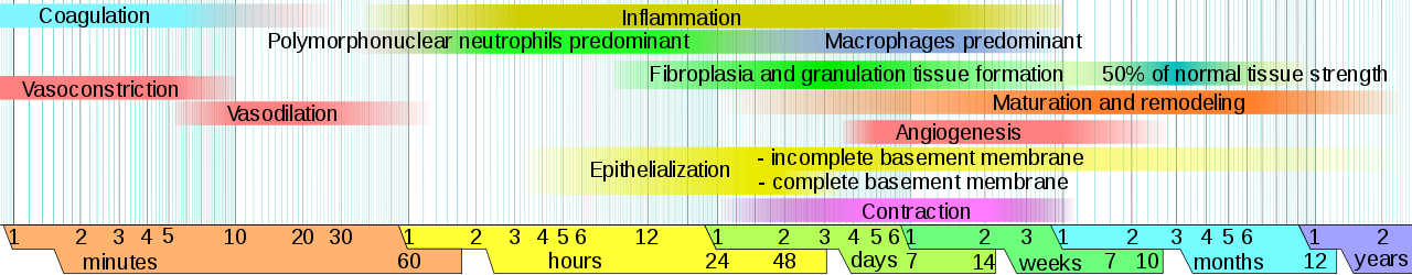 Difference Between Epithelialization and Granulation