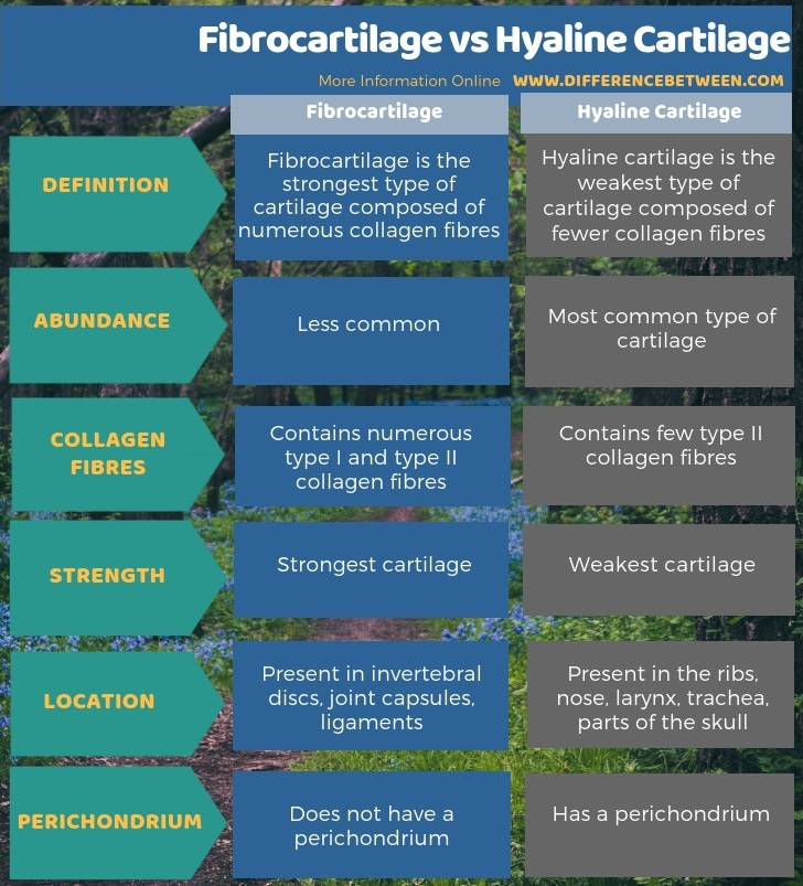 Difference Between Fibrocartilage And Hyaline Cartilage Compare The Difference Between Similar Terms