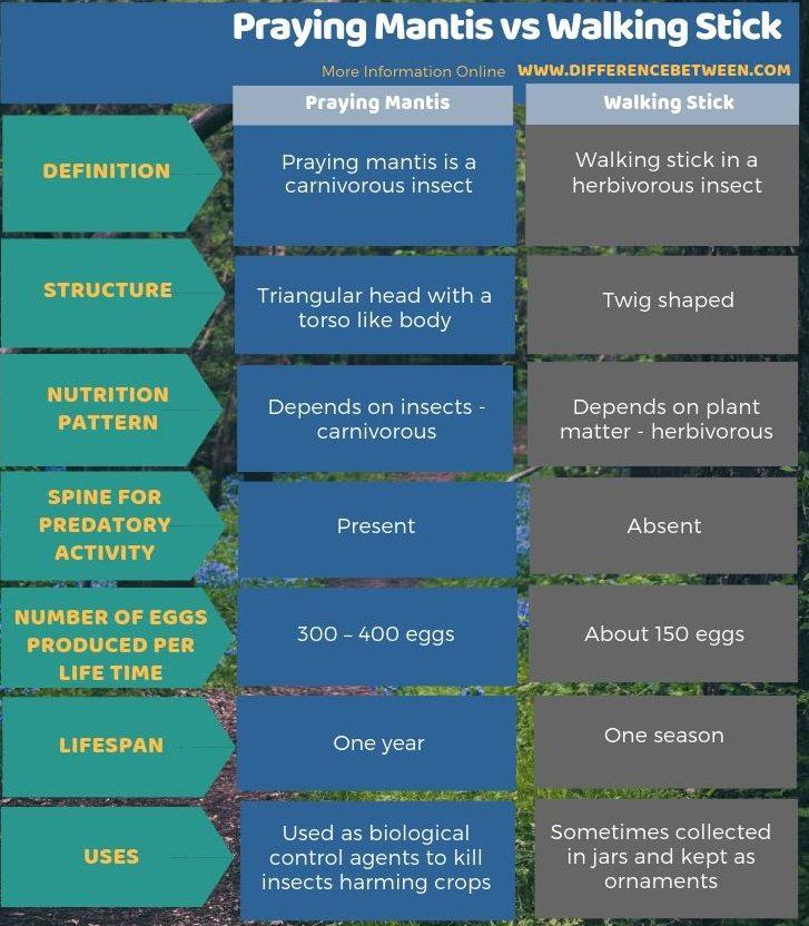 Difference Between Praying Mantis and Walking Stick - Tabular Form (1)