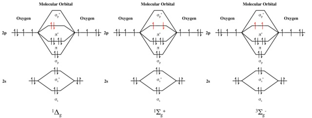 Singlet and Triplet State of Molecular Oxygen