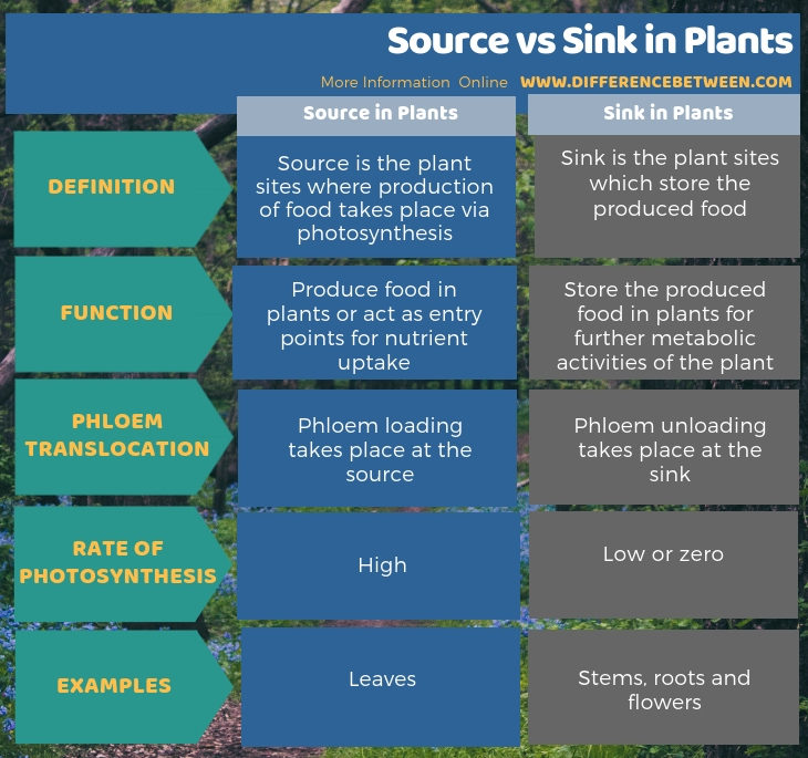 Difference Between Source and Sink in Plants in Tabular Form
