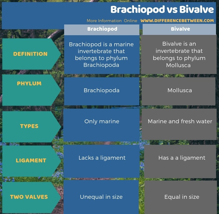 Difference Between Brachiopod and Bivalve in Tabular Form