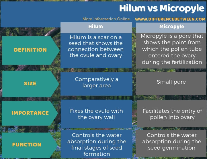 Difference Between Hilum and Micropyle in Tabular Form