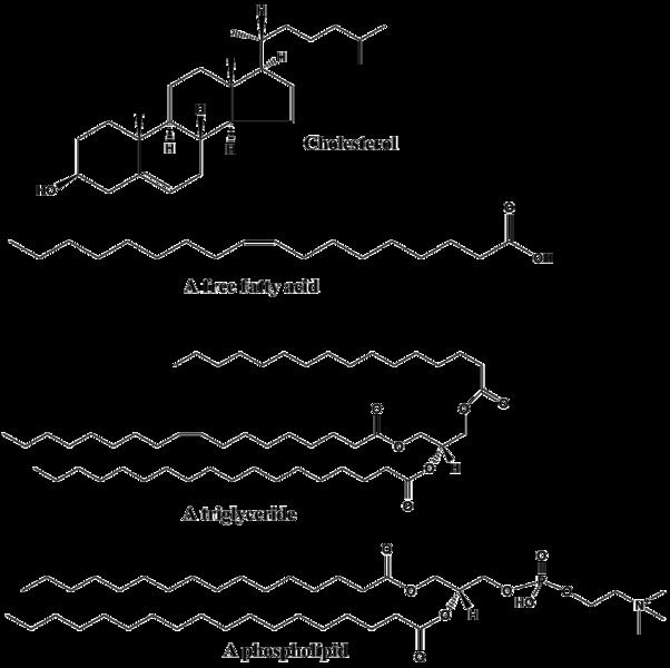 Key Difference - Lipophilic vs Hydrophilic
