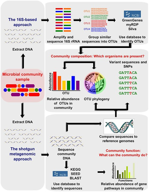 Difference Between Metagenomics and Metatranscriptomics
