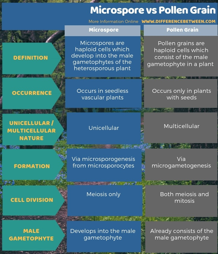 Difference Between Microspore and Pollen Grain in Tabular Form