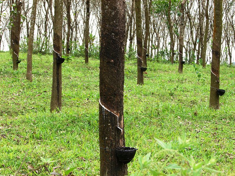 Difference Between Natural Rubber and Vulcanized Rubber