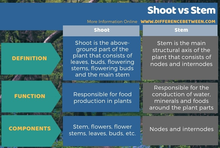 Difference Between Shoot and Stem in Tabular Form