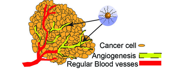 Difference Between Vasculogenesis and Angiogenesis