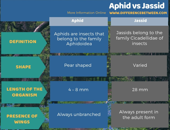 Difference Between Aphid and Jassid in Tabular Form