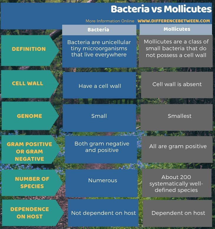 Difference Between Bacteria and Mollicutes in Tabular Form