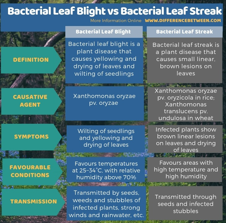 Difference Between Bacterial Leaf Blight and Bacterial Leaf Streak in Tabular Form