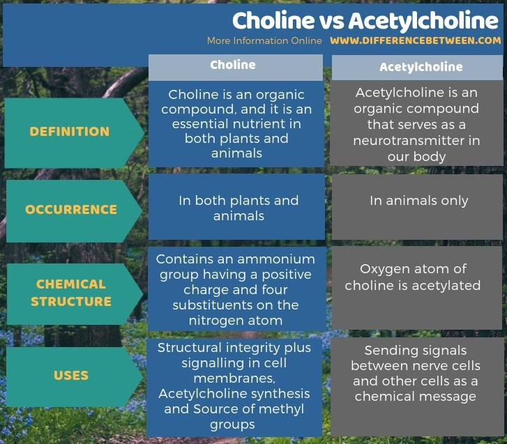 Difference Between Choline and Acetylcholine in Tabular Form
