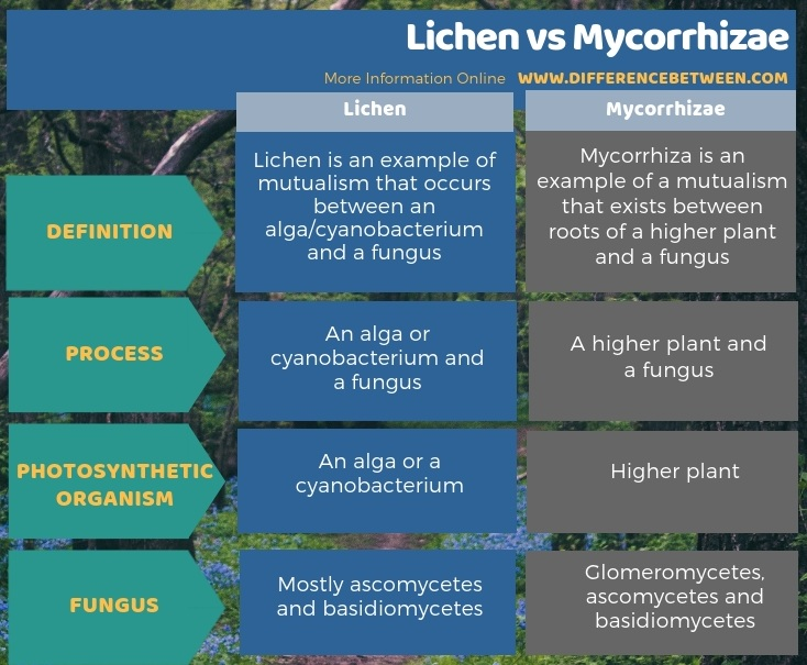 Difference Between Lichen and Mycorrhizae in Tabular Form