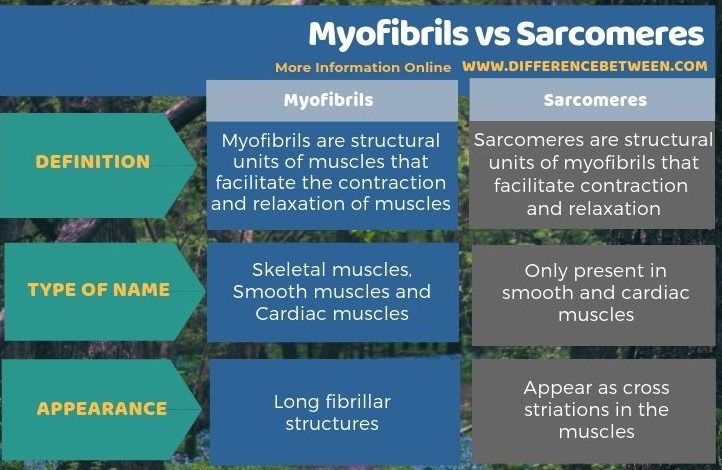 Difference Between Myofibrils and Sarcomeres in Tabular Form