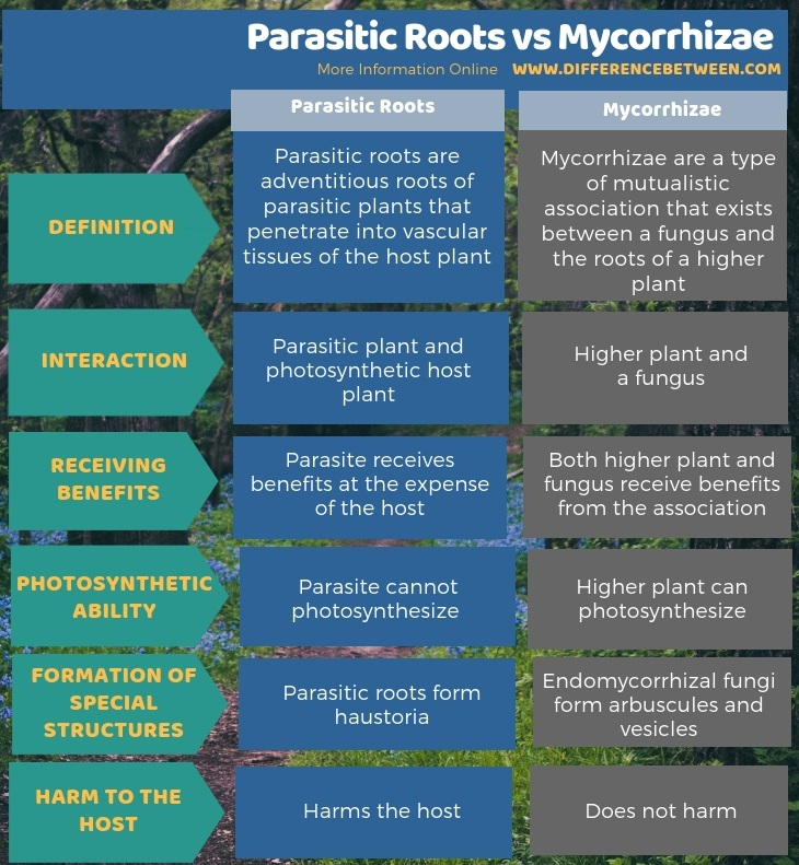 Difference Between Parasitic Roots and Mycorrhizae in Tabular Form
