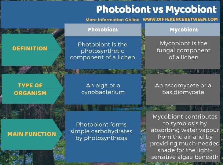 Difference Between Photobiont and Mycobiont in Tabular Form