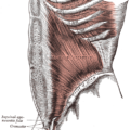 Difference Between Superficial and Deep Fascia
