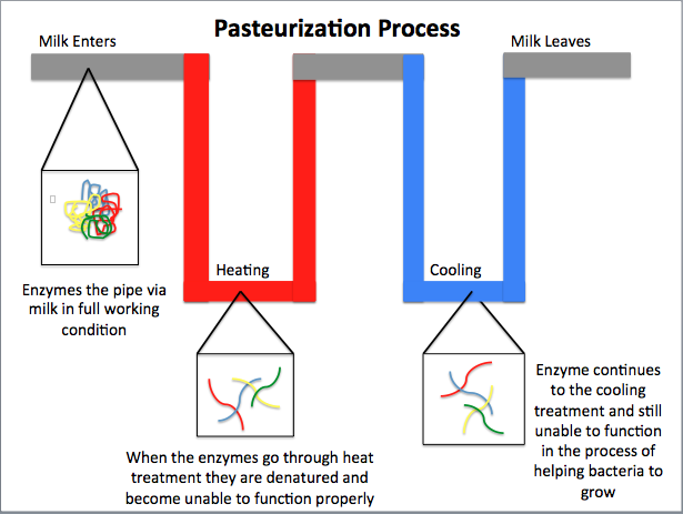 Difference Between Tyndallization and Pasteurization