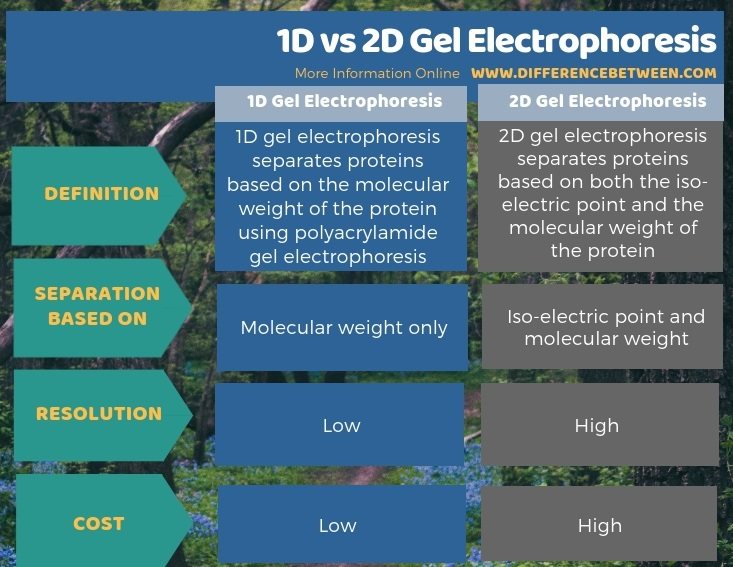 Difference Between 1D and 2D Gel Electrophoresis in Tabular Form