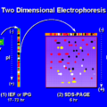 Difference Between 1D and 2D Gel Electrophoresis