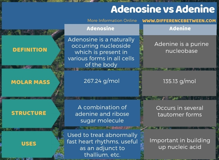 Difference Between Adenosine and Adenine in Tabular Form