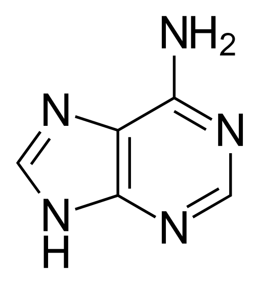 Difference Between Adenosine and Adenine