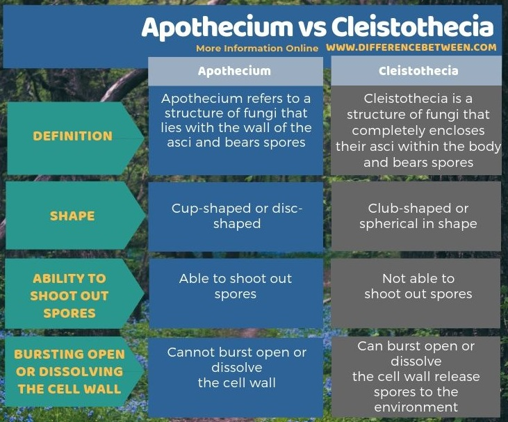 Difference Between Apothecium and Cleistothecia in Tabular Form
