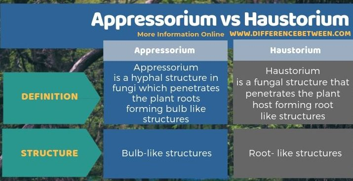 Difference Between Appressorium and Haustorium in Tabular Form