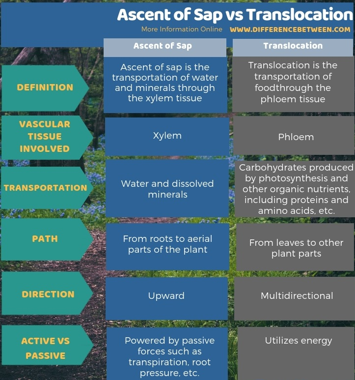 Difference Between Ascent of Sap and Translocation in Tabular Form