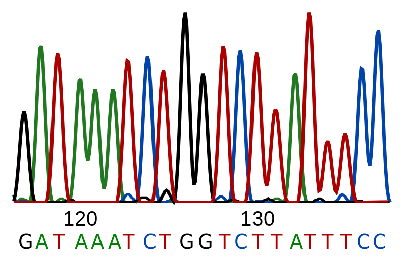Difference Between Base Sequence and Amino Acid Sequence
