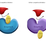 Difference Between Catalyst and Inhibitor